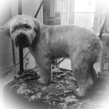 For Pets Only - Beautifully Groomed Dog